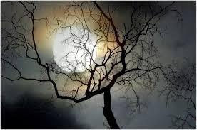 l'arbre et la lune de moniqueetdany