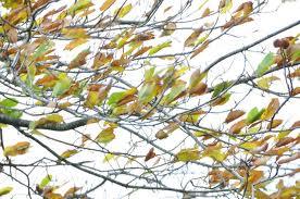 vent dans les feuilles