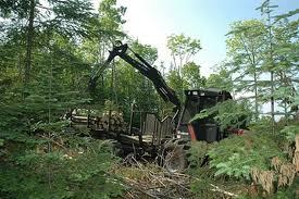 Destruction de la forêt amazonienne